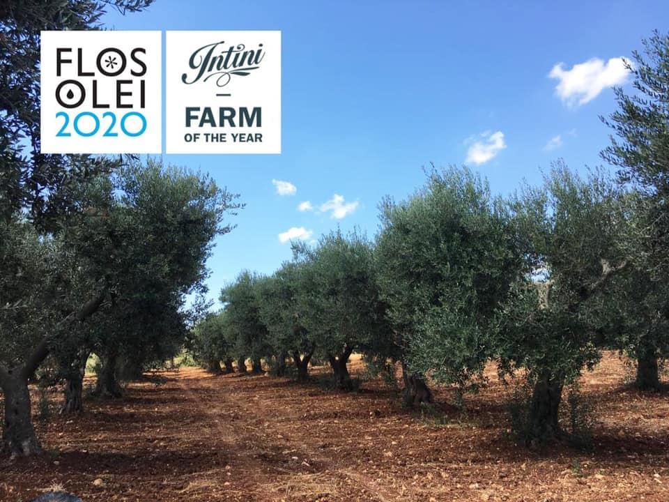 Olio Intini azienda olio extravergine al mondo | Agorà Blog